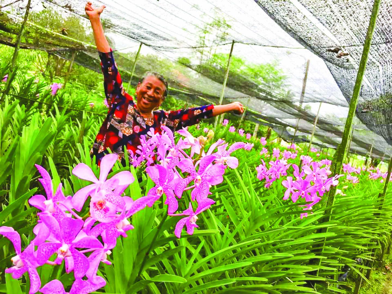 Zebra Zoum: Pour l'amour d'une Pivoine
